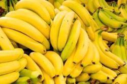 Hundeernährung Bananen