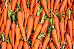 Hundeernährung Karotten