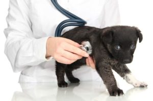 Professionelle Hundepflege beim Arzt