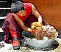 Hundeshampoo notwendig für die Haarpflege bei Hunden?