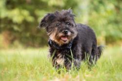Hundeschuppen - Was dagegen tun?