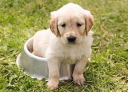 Tipps gegen Durchfall Tipps Hundeernährung Durchfall